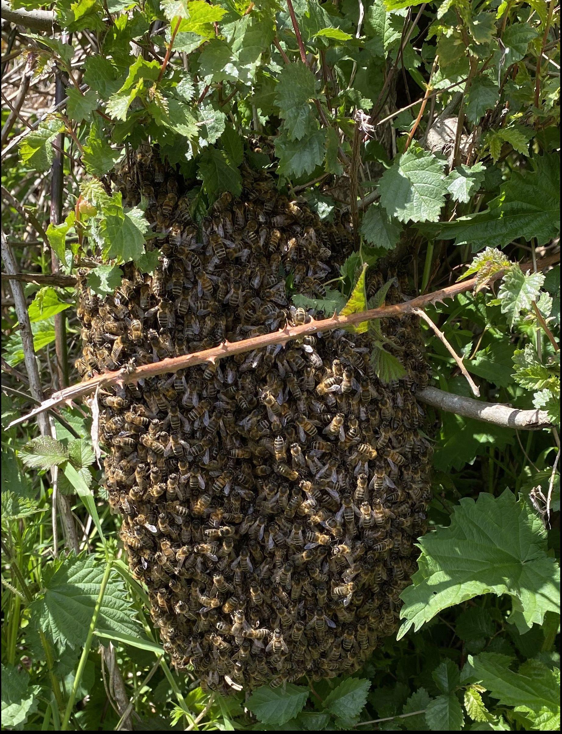 swarm bhg 210512